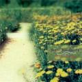 آلبوم « احساسات قلبی » تلفیق زیبای پیانو و سازهای زهی از یوکی کوراموتو