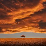 آلبوم Emotional & Soft Background Music موسیقی پس زمینه آرام و احساسی از Paul Werner