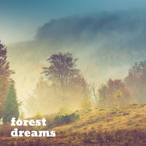 موسیقی امبینت آرامش بخش و عمیق Succession اثری از Forest Dreams
