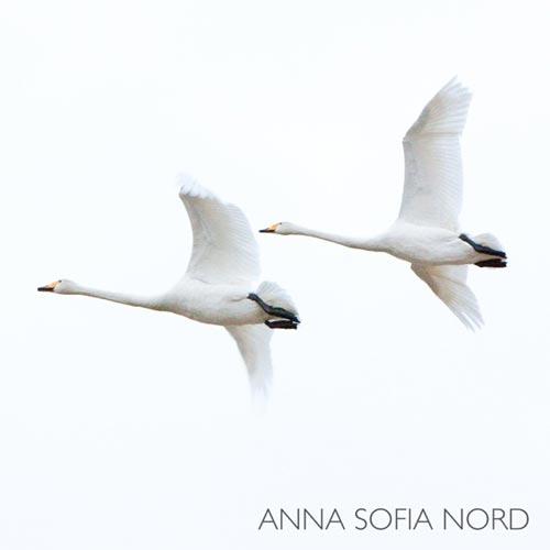 آلبوم Anna Sofia Nord تکنوازی پیانو آرامش بخش و تسکین دهنده