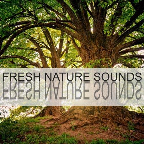 آلبوم Fresh Nature Sounds صدای طبیعت جنگل با محوریت صدای پرندگان