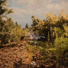 موسیقی امبینت Hibernation اثری آرامش بخش از brillion