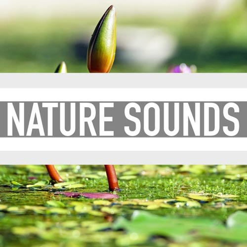 آلبوم Nature Sounds صدای طبیعت مناسب برای تمدد اعصاب و مدیتیشن