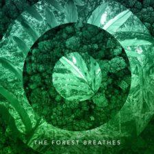 موسیقی بی کلام آرامش بخش The Forest Breathes اثری از Music Within