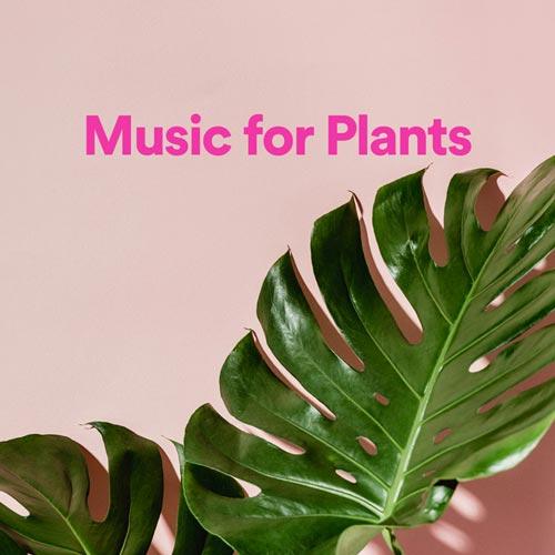 پلی لیست موسیقی برای گیاهان (Music for Plants)