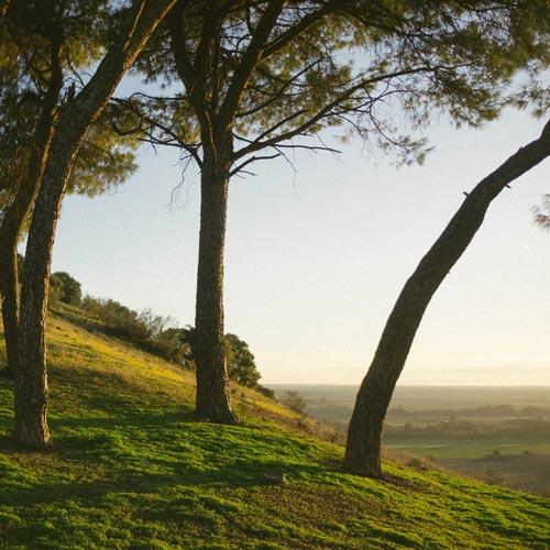 روح بهار ، پیانو آرامش بخش از بروک هیویت