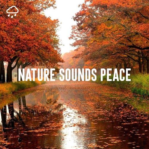 آرامش با صدای طبیعت (صدای پرندگان در جنگل)