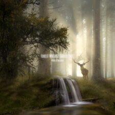 نجوای جنگل ، چنگ الهام بخش و خیال انگیز از پدر بی. هلاند